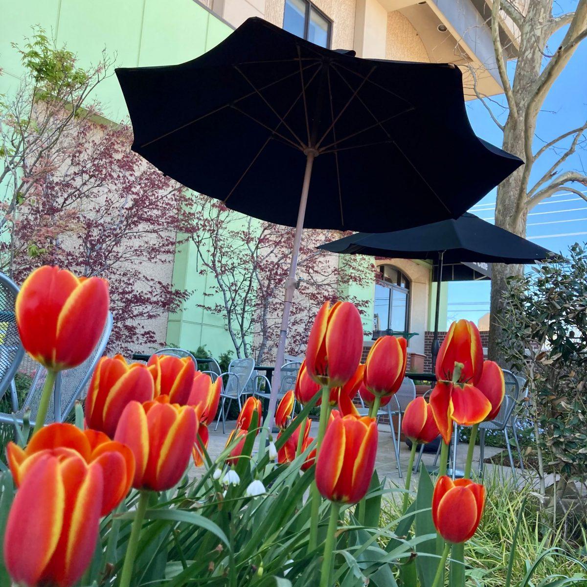 Outside The Garden Cafe